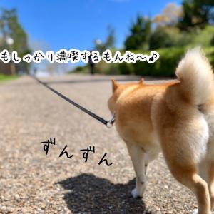 ◎遠足コース◎春探検隊