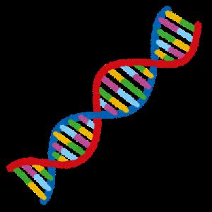 遺伝子の塩基配列でAGAの発症が決まる!?