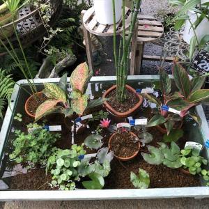 園芸店の水辺の植物の寄せ植え