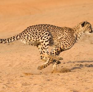 甲腕一致は獣の力を呼びさます! 肩甲骨と腕の最適位置