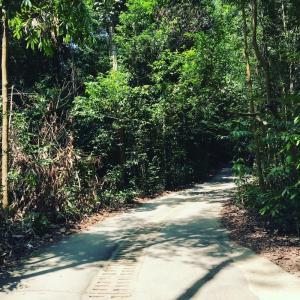 【Bukit Timah Nature Reserve】思いがけない登山。