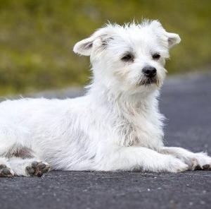 「保護犬」って知っていますか?こんな犬の半生があります。