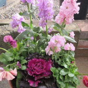 寄せ植え & バラの蕾