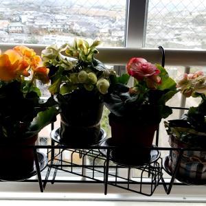 窓際ガーデン