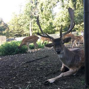 鹿ガーデン