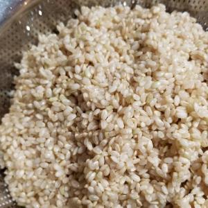 しっかり浸水して圧力鍋で玄米炊いたらめちゃモチモチでうまい玄米ができた