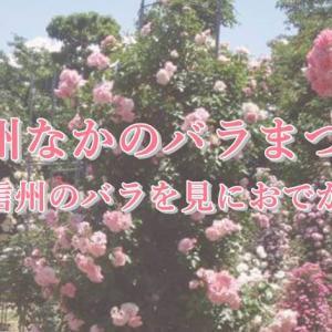 中野市バラ祭り2019!日程や見どころは?園芸王子のバラも!【北信州のバラを見におでかけ】