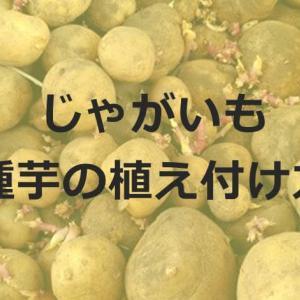 じゃがいもの植え付け時期はいつ?じゃがいもの種芋のカビは大丈夫?