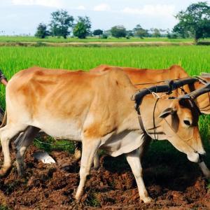 CAMPFIRE Ownersが新ファンド「カンボジア農家支援ファンド3号」を募集開始|予定年利6.0パーセント、11ヶ月運用