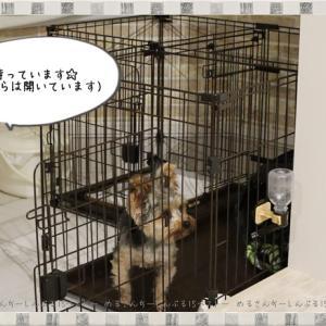 室内犬のトイレトレーニング!ここまでしつけができれば完ぺき☆トイレで「待て」が出来るようになる方法☆