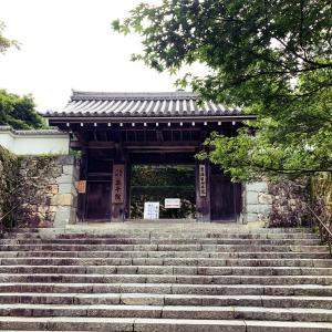 【京都】(写真多数)緑滴る三千院、聚碧園の額縁庭園を愛でる