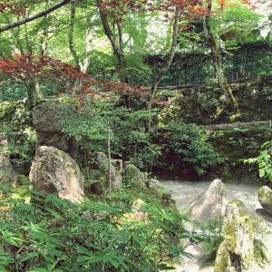 【京都】宝泉院② 宝楽園の枯山水庭園|庭園めぐり