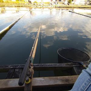 今日の新池