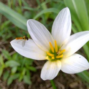 お花さんと蜂さん ♫♫♫