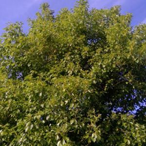 地球環境回復活動で植物さんたち、モコモコに ♫♫♫