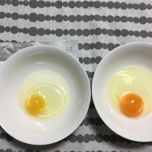 こだわりの卵 平飼い有精卵