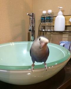 ロクロウの水浴び