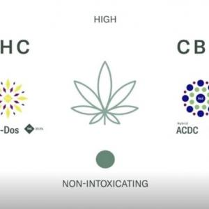 CBD vs THC 何が違うの?