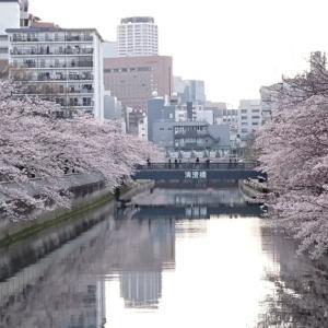 満開の桜とイベントと。