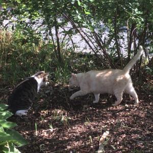 猫が集まる公園の謎