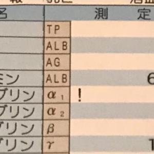 11月栄養採血〜タンパク質編〜