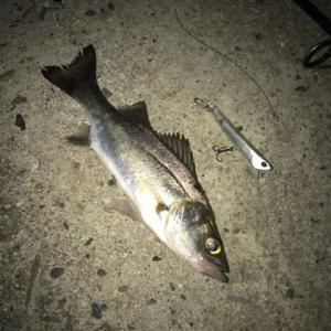 5月29日(長潮)の釣行記録