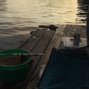 チヌ筏釣り❗️