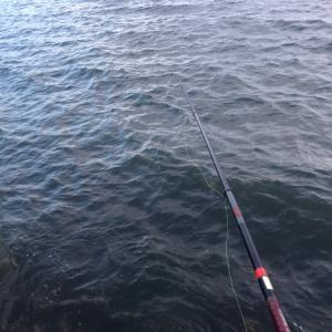 大野漁港 フカセ釣り❗️