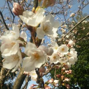 春の足音4