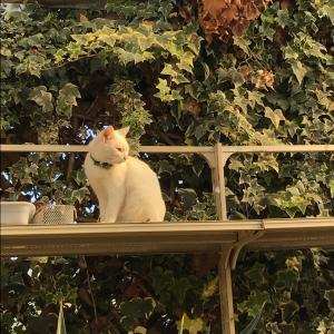 猫パラな農ランド♪