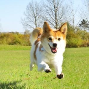 脱走癖のある犬の対処法