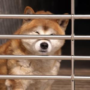 【犬猫の話】「殺処分ゼロ」の欺瞞