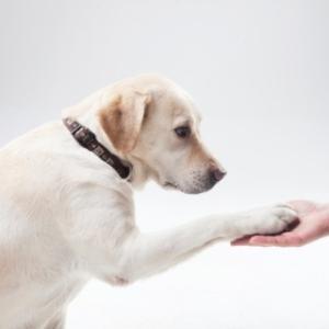 犬におやつを与えるのは迷惑行為である