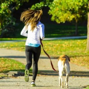サルモネラ菌汚染おやつで犬15匹死亡。犠牲になった犬は免疫力が弱かった?