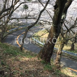 桜8(Sakumu)