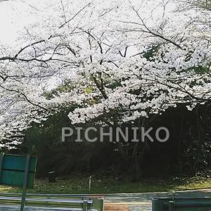 桜10(sakumu)