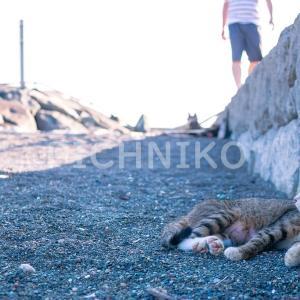 暑さをしのぐ猫の画像