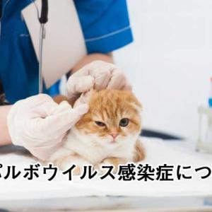 猫パルボウイルス感染症に注意!