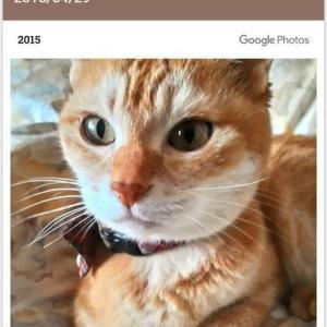 猫の慢性腎不全治療薬ラプロス