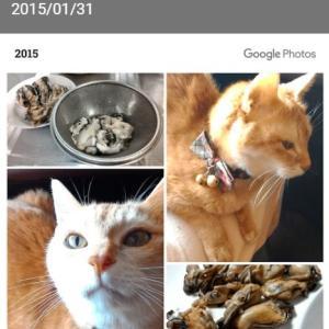 猫闘病中の食欲回復方法【匂いと温度がポイント】