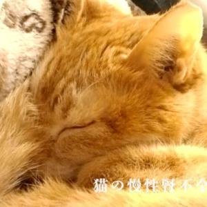 猫の慢性腎不全の新薬「ラプロス」を飲んでる猫ちゃん達の情報とその効果