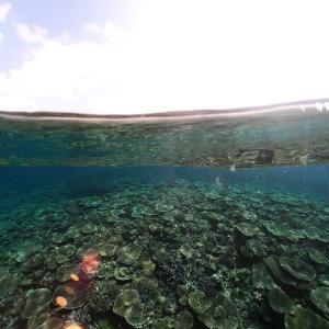 Fish eye2. 地上と水中の環境の境界