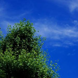 ZEISSの空気125. 梅雨の晴れ間の散歩道3. 色が欲しい