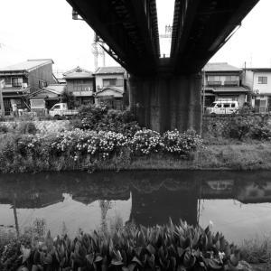 ZEISSの空気133. 普段使いの京都15. 建築撮影用の超広角レンズ