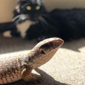 大きな猫と大きなトカゲ