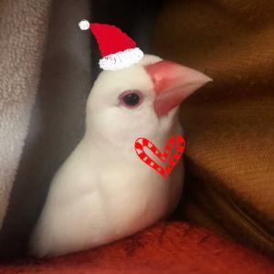 今週の1枚は…☆メリークリスマス☆