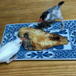 焼き魚と…はるとなつ( ̄m ̄〃)ぷぷっ!