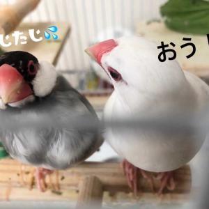 ケージ内ウォッチング(≧◇≦)(≧◇≦)