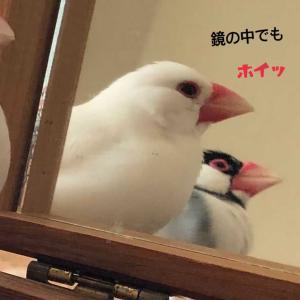 シンクロナイズド豆苗畑(≧◇≦)