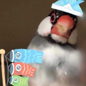 はるちゃんは~自由鳥🐤